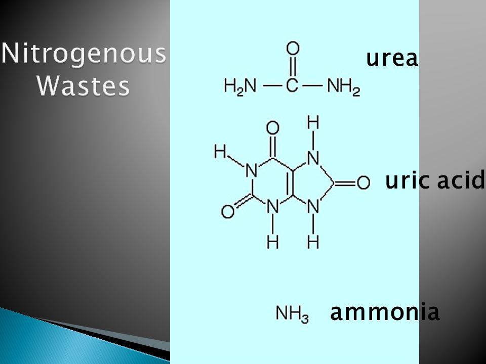 ammonia urea uric acid