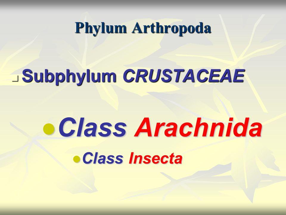 Phylum Arthropoda Subphylum CRUSTACEAE Subphylum CRUSTACEAE ● Class Arachnida ● Class Arachnida ● Class Insecta ● Class Insecta