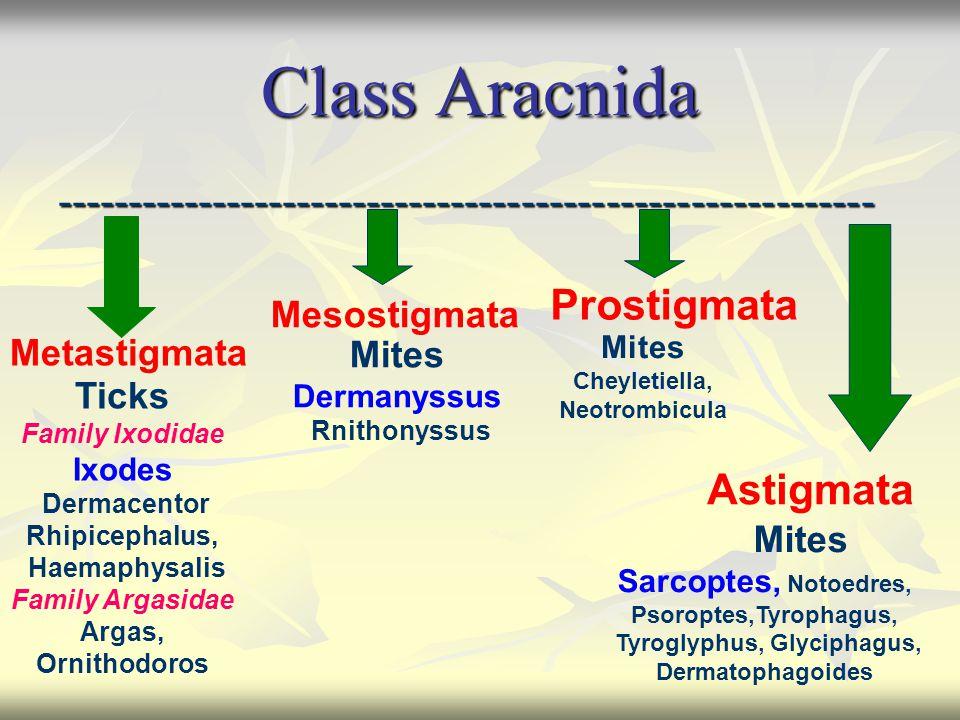 Class Aracnida ---------------------------------------------------------- Metastigmata Mesostigmata Prostigmata Astigmata Ticks Family Ixodidae Ixodes