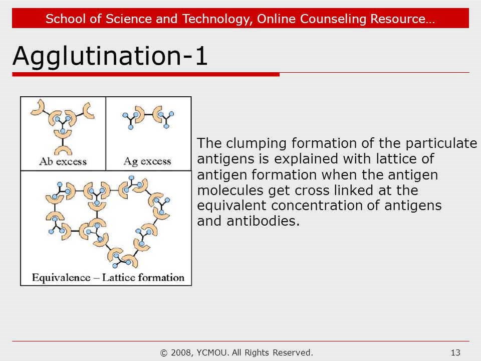 School of Science and Technology, Online Counseling Resource… © 2008, YCMOU. All Rights Reserved.13 Agglutination-1 The clumping formation of the part