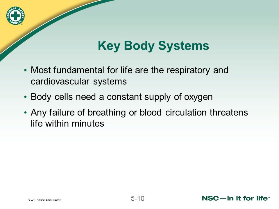 © 2011 National Safety Council 5-10 Key Body Systems Most fundamental for life are the respiratory and cardiovascular systems Body cells need a constant supply of oxygen Any failure of breathing or blood circulation threatens life within minutes