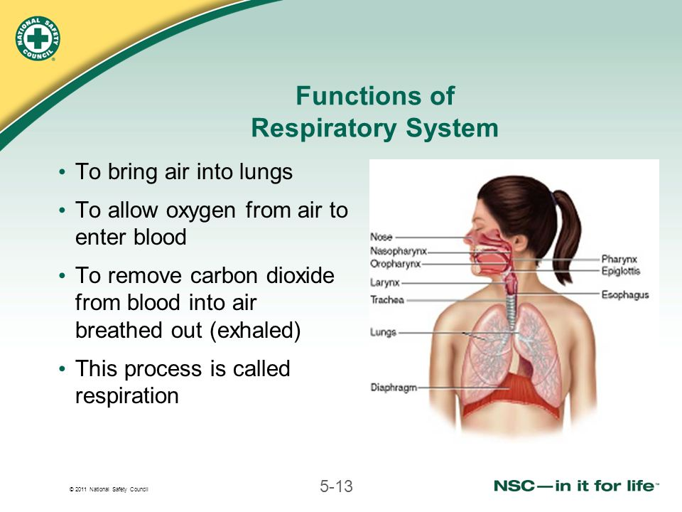 © 2011 National Safety Council 5-13 Functions of Respiratory System To bring air into lungs To allow oxygen from air to enter blood To remove carbon dioxide from blood into air breathed out (exhaled) This process is called respiration