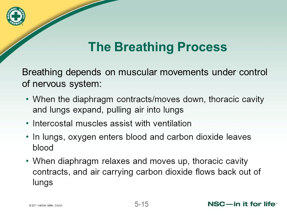 © 2011 National Safety Council 5-15 The Breathing Process Breathing depends on muscular movements under control of nervous system: When the diaphragm contracts/moves down, thoracic cavity and lungs expand, pulling air into lungs Intercostal muscles assist with ventilation In lungs, oxygen enters blood and carbon dioxide leaves blood When diaphragm relaxes and moves up, thoracic cavity contracts, and air carrying carbon dioxide flows back out of lungs