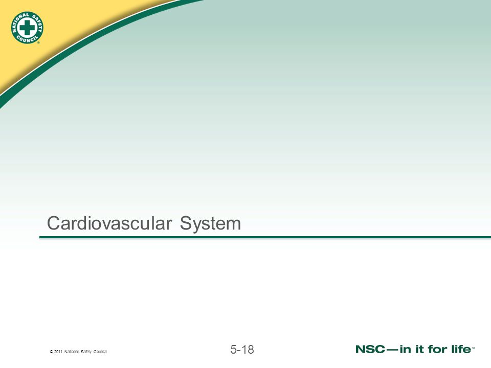 © 2011 National Safety Council 5-18 Cardiovascular System