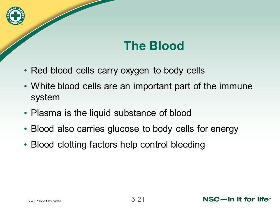 © 2011 National Safety Council 5-21 The Blood Red blood cells carry oxygen to body cells White blood cells are an important part of the immune system Plasma is the liquid substance of blood Blood also carries glucose to body cells for energy Blood clotting factors help control bleeding