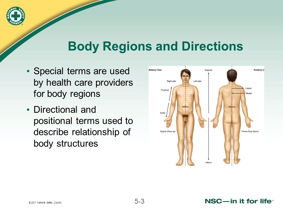 © 2011 National Safety Council 5-3 Body Regions and Directions Special terms are used by health care providers for body regions Directional and positional terms used to describe relationship of body structures