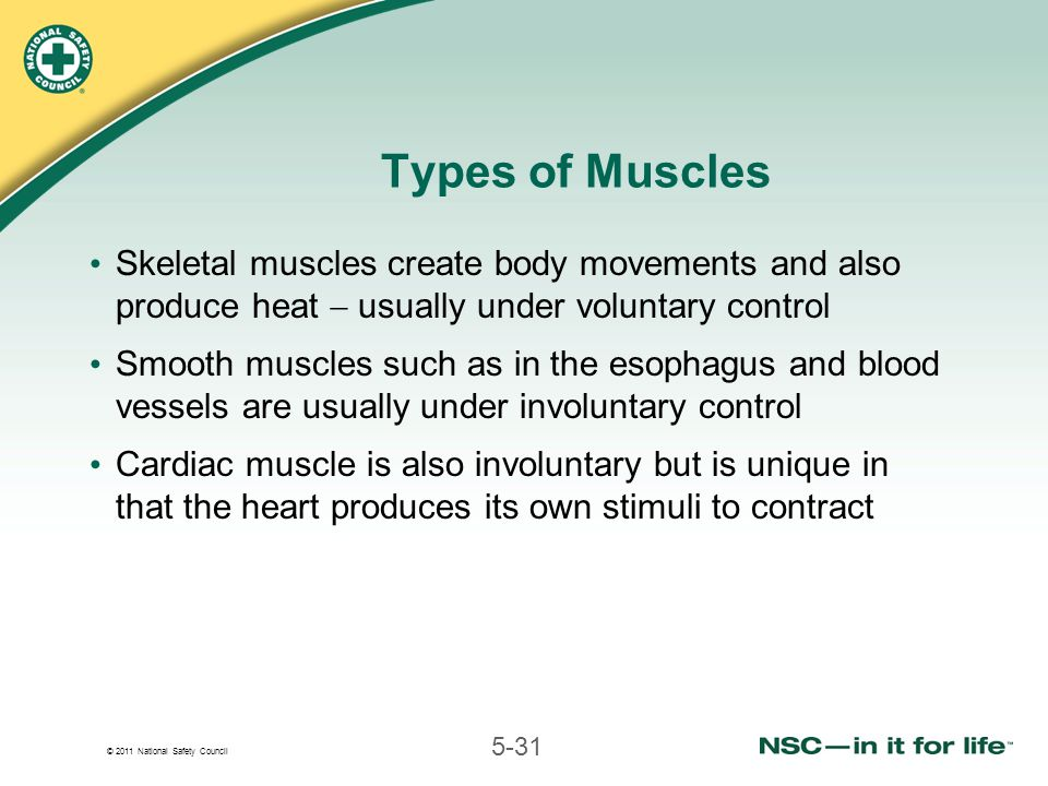 © 2011 National Safety Council 5-31 Types of Muscles Skeletal muscles create body movements and also produce heat  usually under voluntary control Smooth muscles such as in the esophagus and blood vessels are usually under involuntary control Cardiac muscle is also involuntary but is unique in that the heart produces its own stimuli to contract