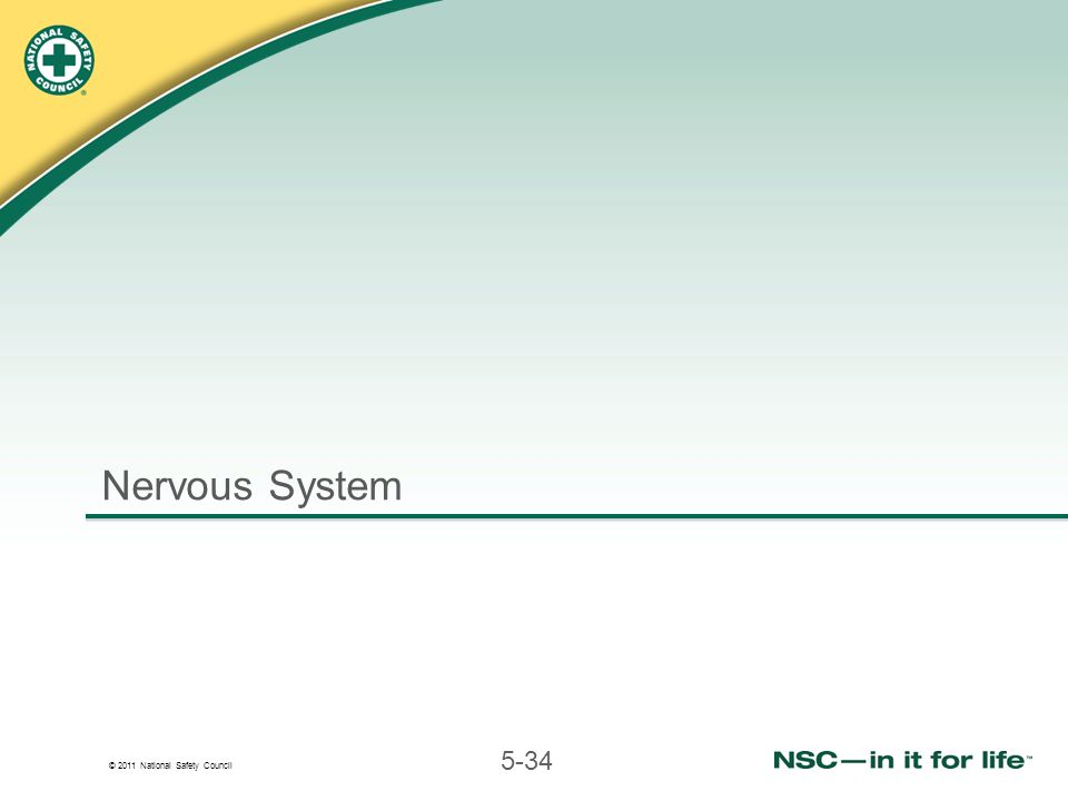© 2011 National Safety Council 5-34 Nervous System