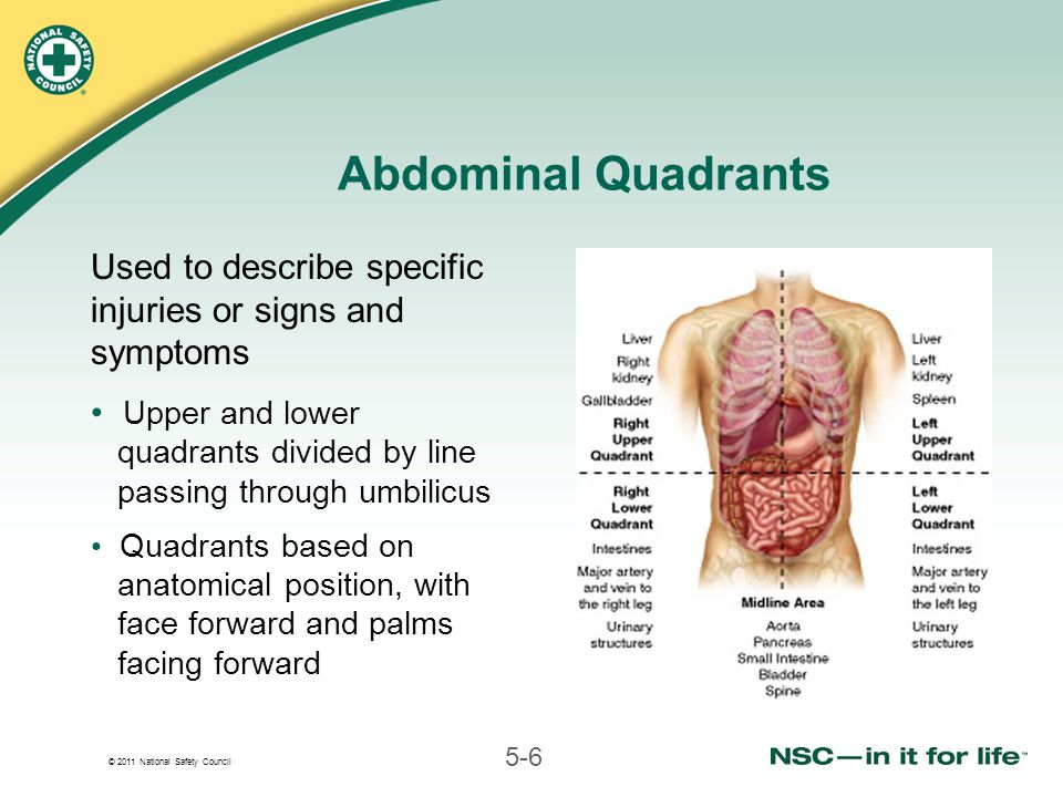 © 2011 National Safety Council 5-6 Abdominal Quadrants Used to describe specific injuries or signs and symptoms Upper and lower quadrants divided by line passing through umbilicus Quadrants based on anatomical position, with face forward and palms facing forward