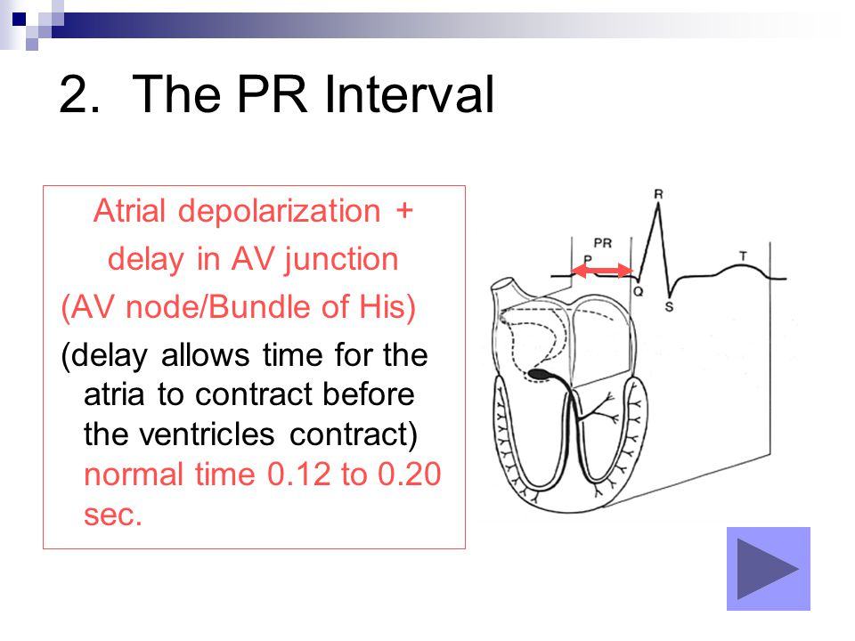 2. The PR Interval Atrial depolarization + delay in AV junction (AV node/Bundle of His) (delay allows time for the atria to contract before the ventri