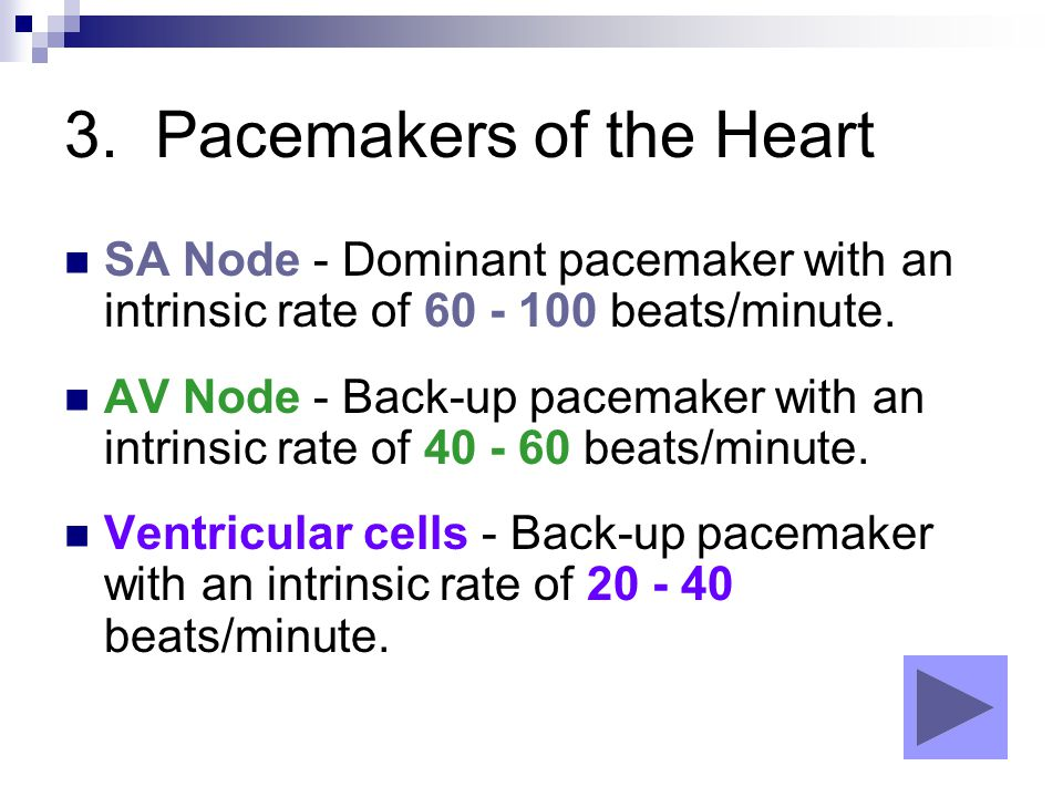 3. Pacemakers of the Heart SA Node - Dominant pacemaker with an intrinsic rate of 60 - 100 beats/minute. AV Node - Back-up pacemaker with an intrinsic