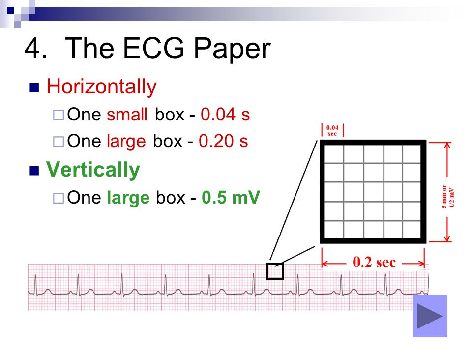 4. The ECG Paper Horizontally  One small box - 0.04 s  One large box - 0.20 s Vertically  One large box - 0.5 mV