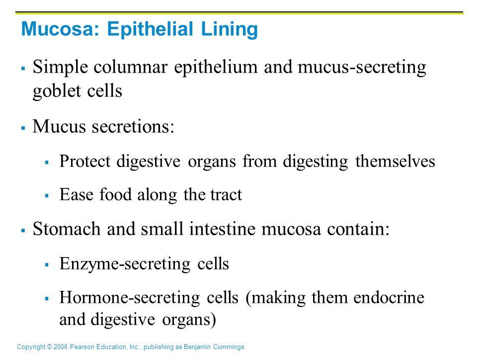 Copyright © 2006 Pearson Education, Inc., publishing as Benjamin Cummings Mucosa: Epithelial Lining  Simple columnar epithelium and mucus-secreting g
