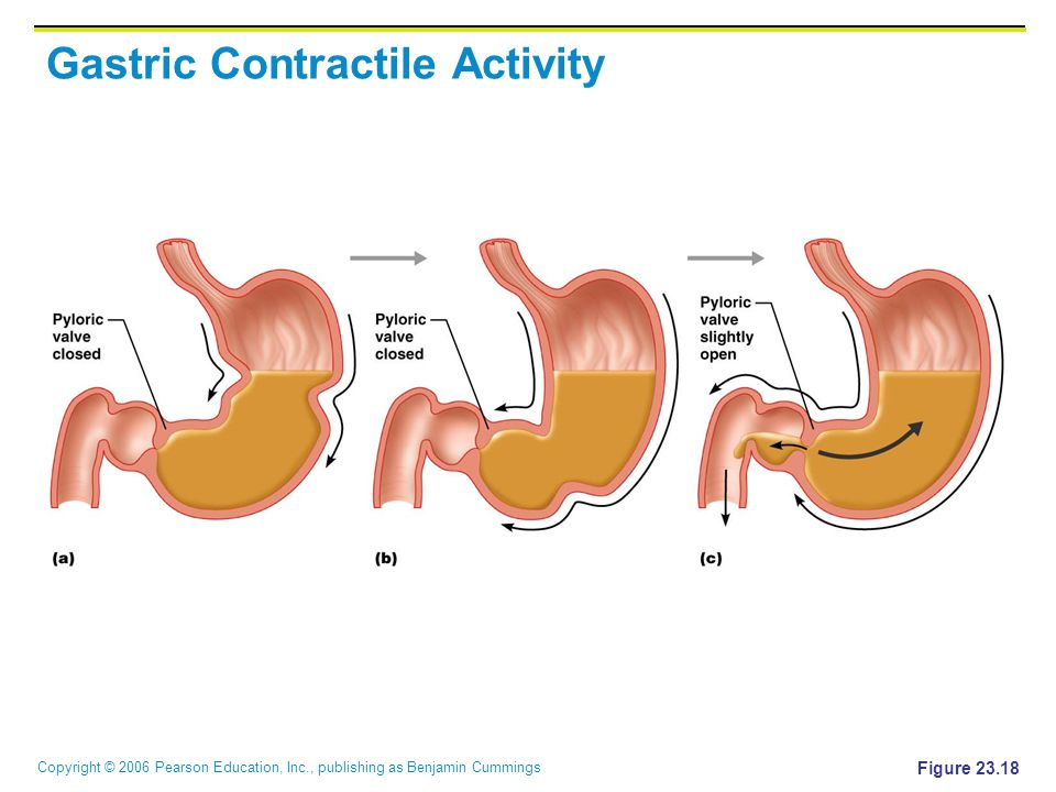 Copyright © 2006 Pearson Education, Inc., publishing as Benjamin Cummings Gastric Contractile Activity Figure 23.18