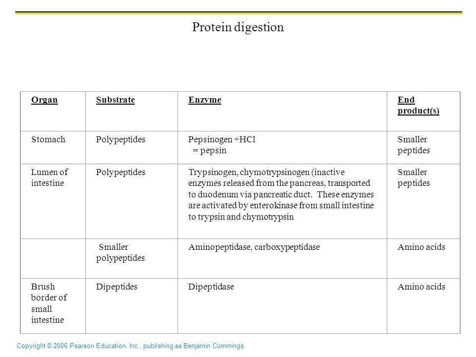 Copyright © 2006 Pearson Education, Inc., publishing as Benjamin Cummings Protein digestion OrganSubstrateEnzymeEnd product(s) Stomach PolypeptidesPep