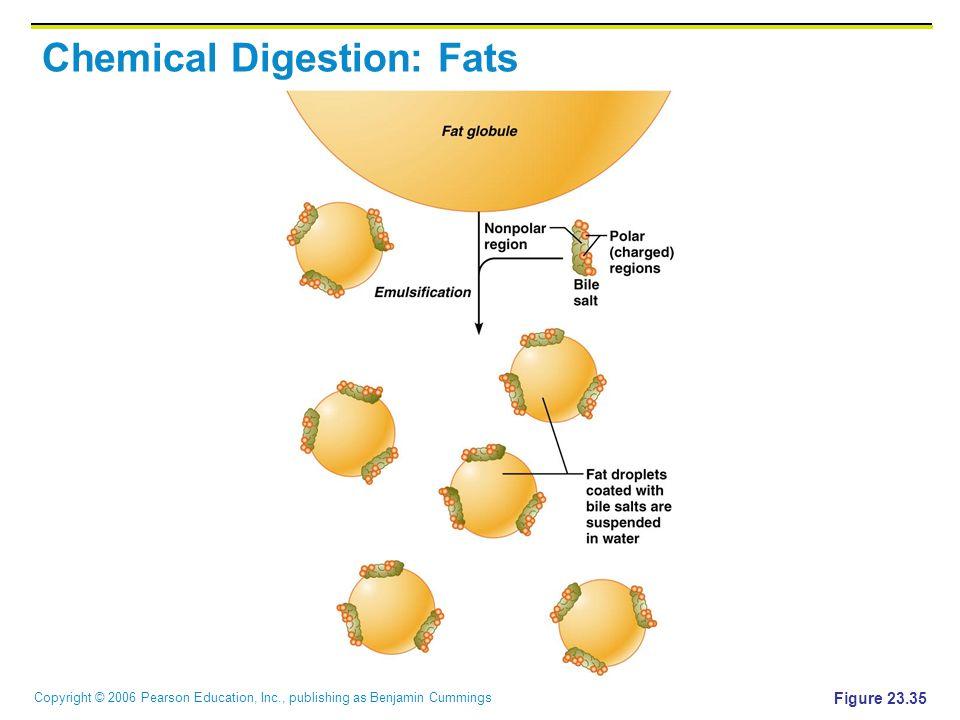 Copyright © 2006 Pearson Education, Inc., publishing as Benjamin Cummings Chemical Digestion: Fats Figure 23.35