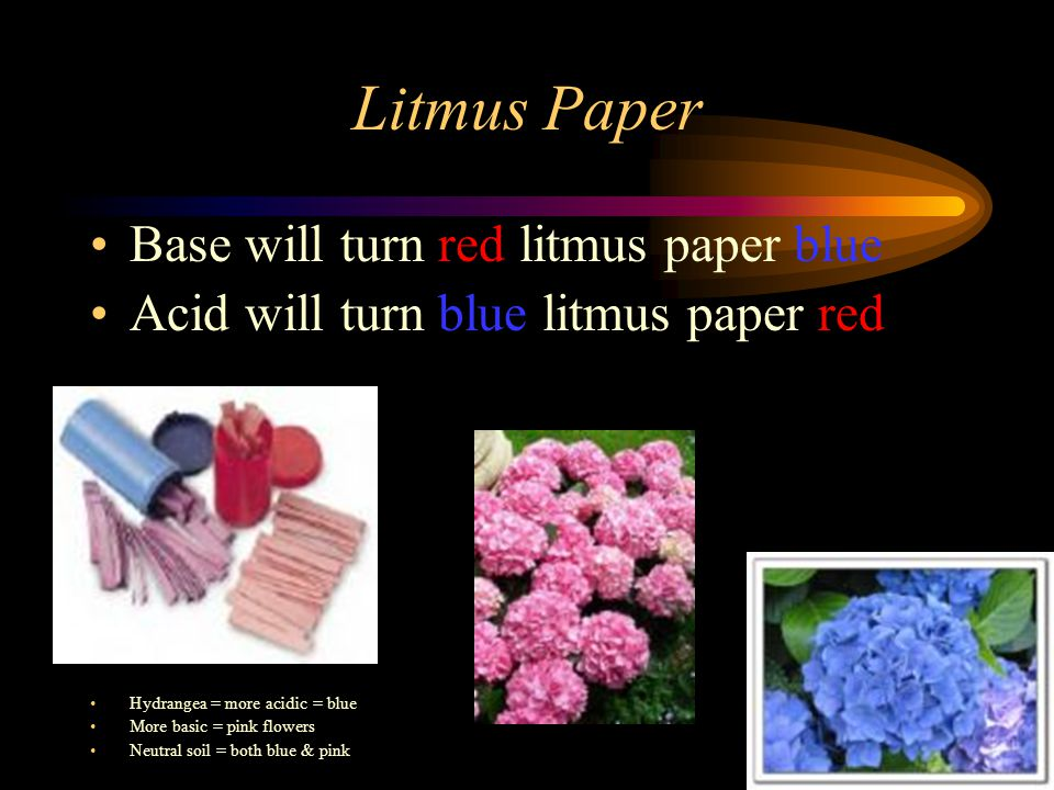 Litmus Paper Base will turn red litmus paper blue Acid will turn blue litmus paper red Hydrangea = more acidic = blue More basic = pink flowers Neutral soil = both blue & pink