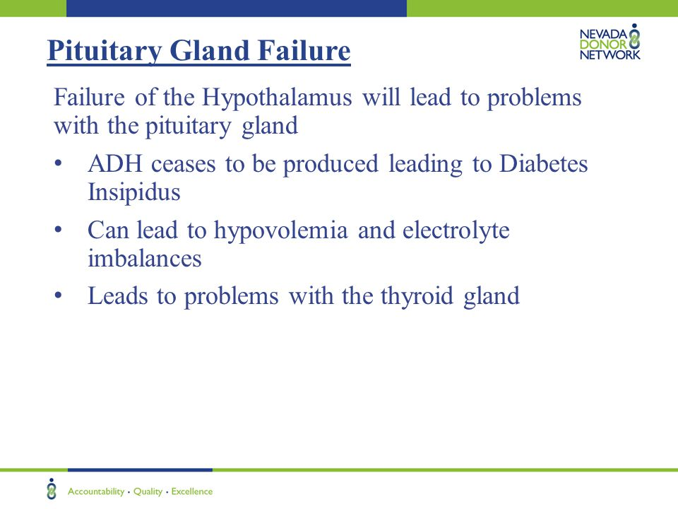 Pituitary Gland Failure Failure of the Hypothalamus will lead to problems with the pituitary gland ADH ceases to be produced leading to Diabetes Insip