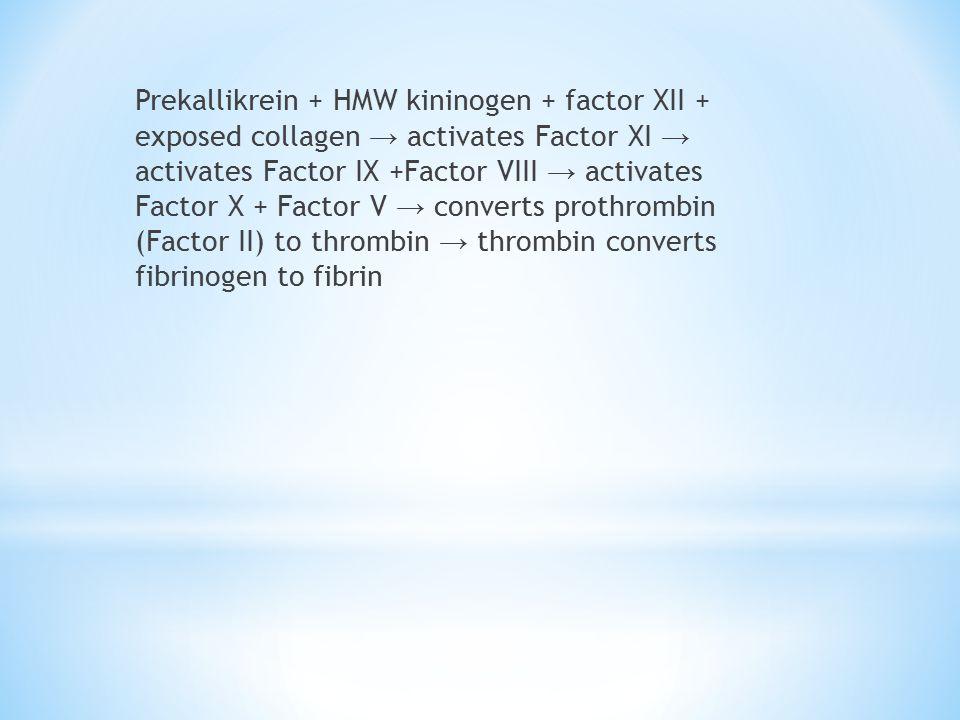 Prekallikrein + HMW kininogen + factor XII + exposed collagen → activates Factor XI → activates Factor IX +Factor VIII → activates Factor X + Factor V → converts prothrombin (Factor II) to thrombin → thrombin converts fibrinogen to fibrin