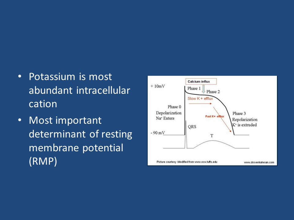 Potassium is most abundant intracellular cation Most important determinant of resting membrane potential (RMP)