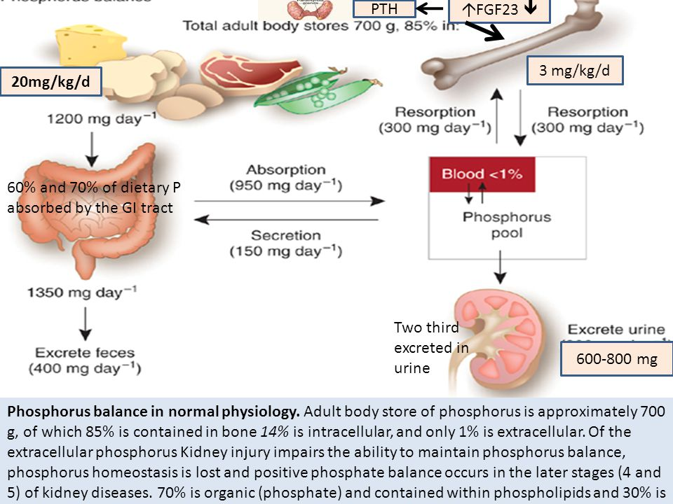 Phosphorus balance in normal physiology. Adult body store of phosphorus is approximately 700 g, of which 85% is contained in bone 14% is intracellular