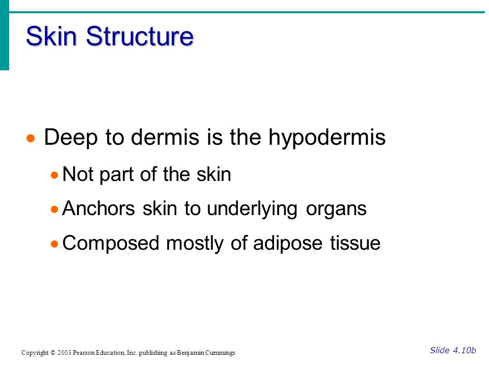 Skin Structure Slide 4.10b Copyright © 2003 Pearson Education, Inc. publishing as Benjamin Cummings  Deep to dermis is the hypodermis  Not part of t