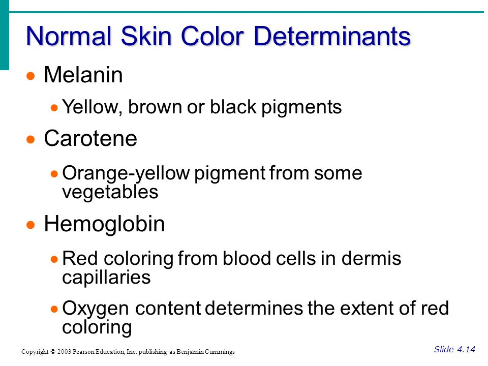 Normal Skin Color Determinants Slide 4.14 Copyright © 2003 Pearson Education, Inc. publishing as Benjamin Cummings  Melanin  Yellow, brown or black