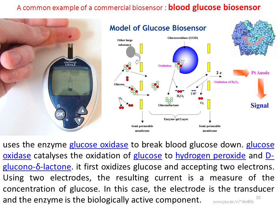 uses the enzyme glucose oxidase to break blood glucose down.
