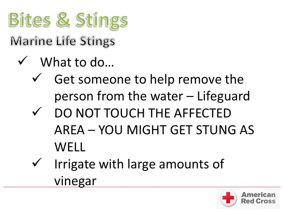 What to do… Get someone to help remove the person from the water – Lifeguard DO NOT TOUCH THE AFFECTED AREA – YOU MIGHT GET STUNG AS WELL Irrigate with large amounts of vinegar