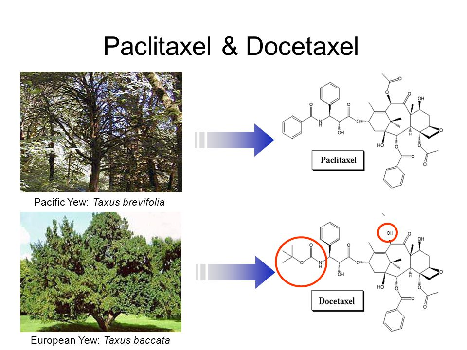 Paclitaxel & Docetaxel 1971 1986 OH European Yew: Taxus baccata Pacific Yew: Taxus brevifolia