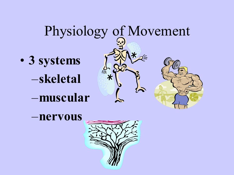 Physiology of Movement 3 systems –skeletal –muscular –nervous
