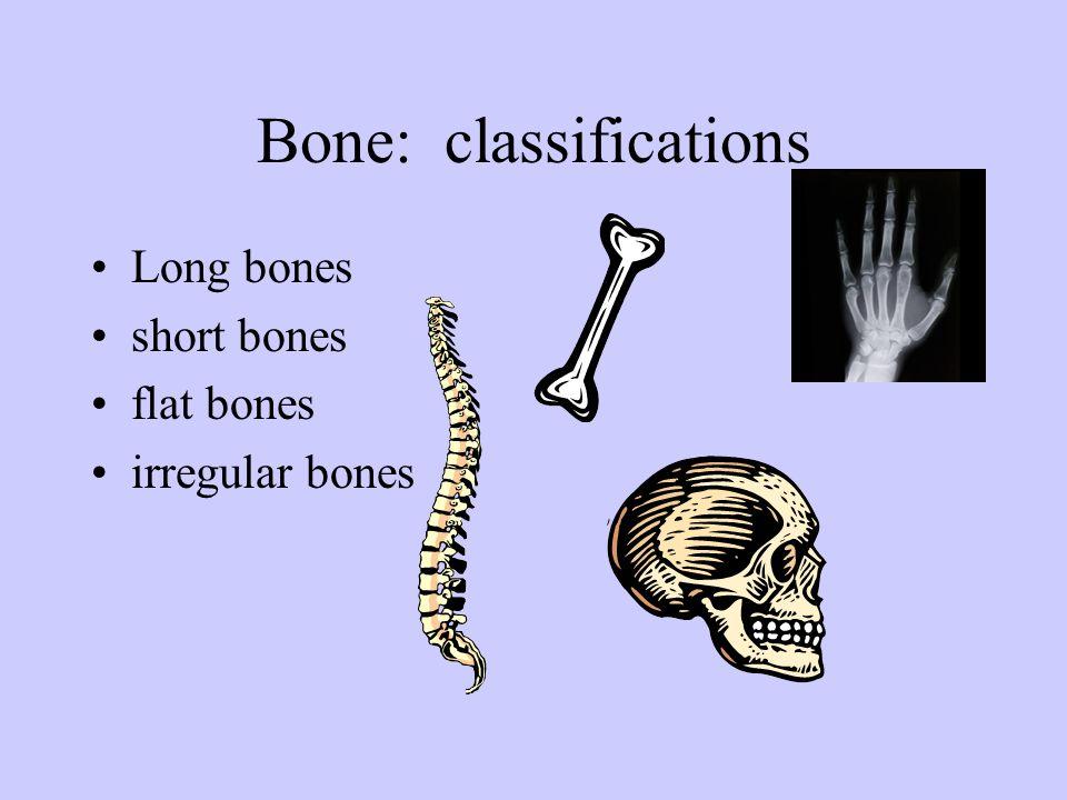 Bone: classifications Long bones short bones flat bones irregular bones