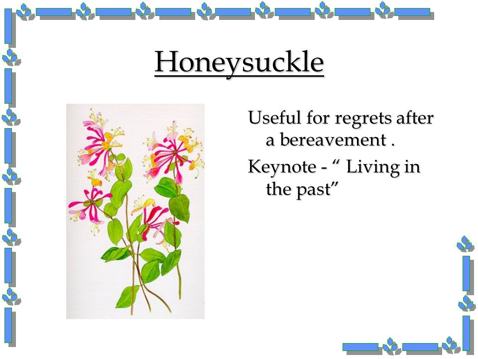"""Honeysuckle Useful for regrets after a bereavement. Keynote - """" Living in the past"""""""