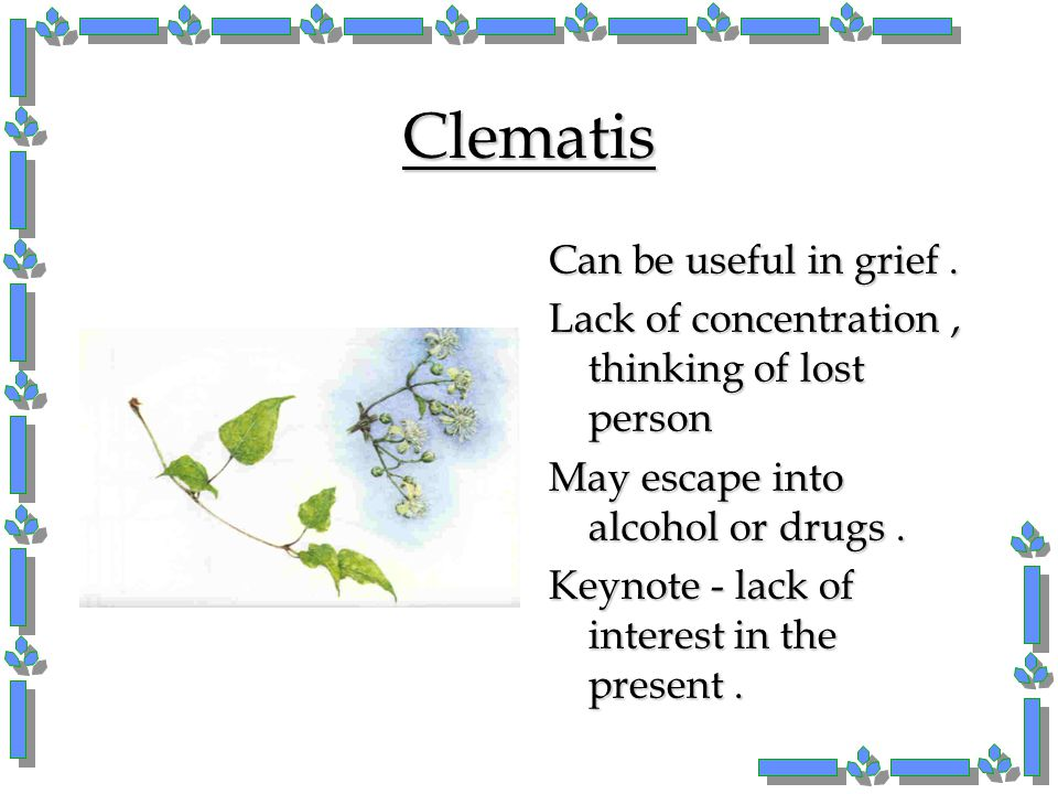 Clematis Can be useful in grief. Lack of concentration, thinking of lost person May escape into alcohol or drugs. Keynote - lack of interest in the pr