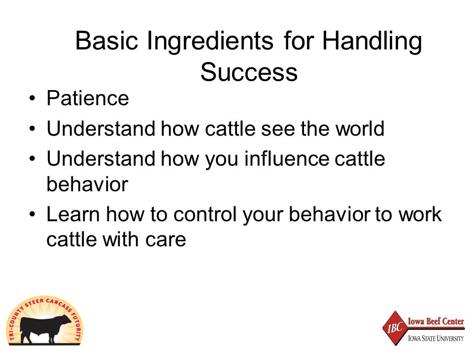 Basic Ingredients for Handling Success Patience Understand how cattle see the world Understand how you influence cattle behavior Learn how to control your behavior to work cattle with care