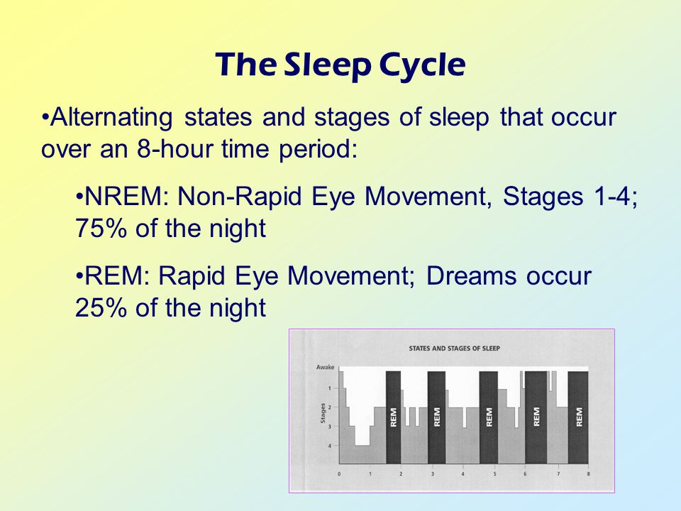 The Sleep Cycle Alternating states and stages of sleep that occur over an 8-hour time period: NREM: Non-Rapid Eye Movement, Stages 1-4; 75% of the night REM: Rapid Eye Movement; Dreams occur 25% of the night