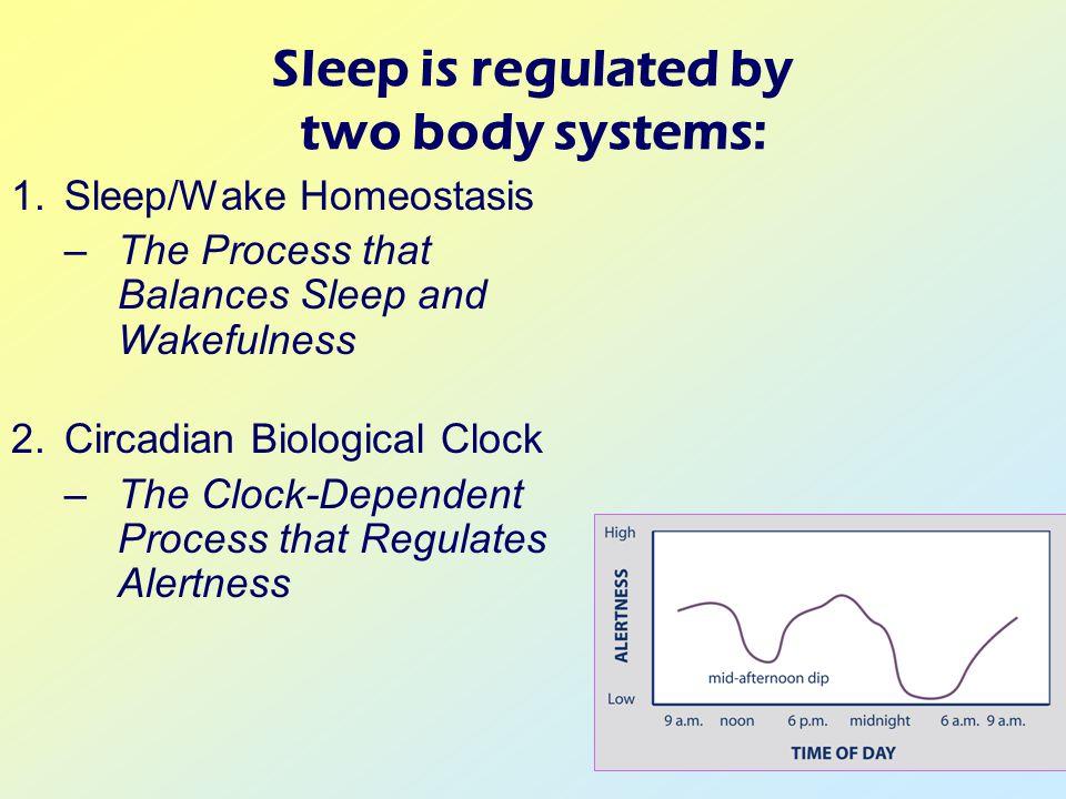 Sleep is regulated by two body systems: 1.Sleep/Wake Homeostasis –The Process that Balances Sleep and Wakefulness 2.Circadian Biological Clock –The Clock-Dependent Process that Regulates Alertness