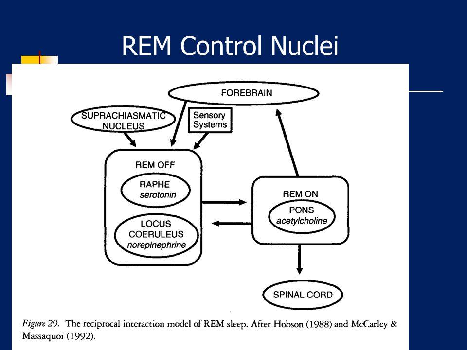 Onset of REM R & K 1968 REM sleep onset