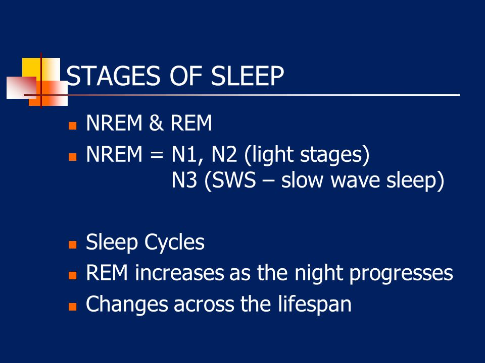 STAGES OF SLEEP NREM & REM NREM = N1, N2 (light stages) N3 (SWS – slow wave sleep) Sleep Cycles REM increases as the night progresses Changes across the lifespan