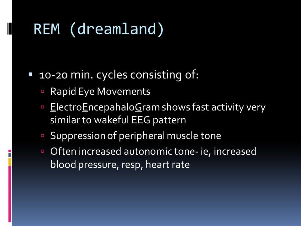 REM (dreamland)  10-20 min.