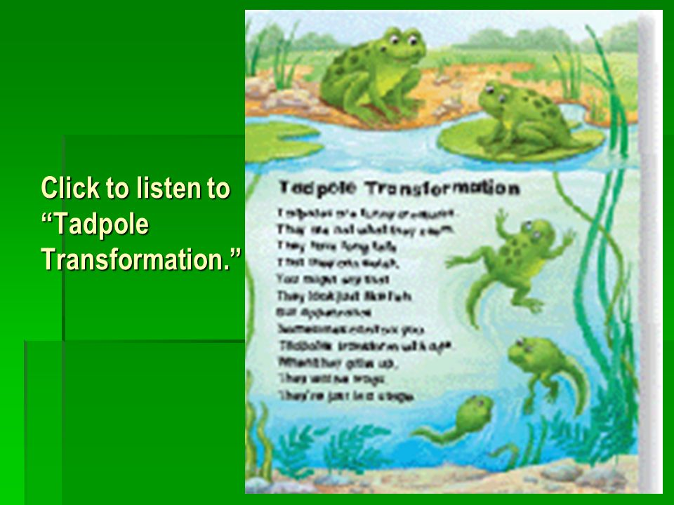 Click to listen to Tadpole Transformation.