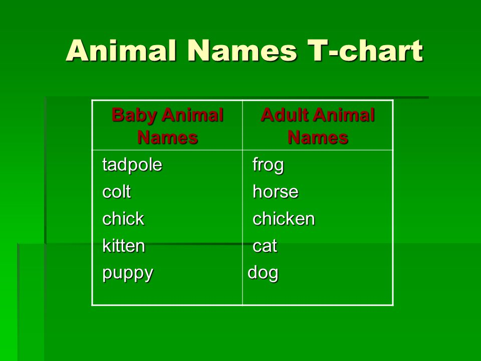 Animal Names T-chart Baby Animal Names Adult Animal Names tadpole tadpole colt colt chick chick kitten kitten puppy puppy frog frog horse horse chicke