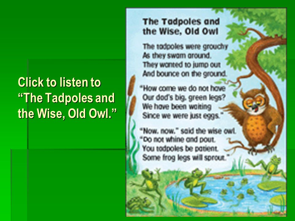 Click to listen to The Tadpoles and the Wise, Old Owl.