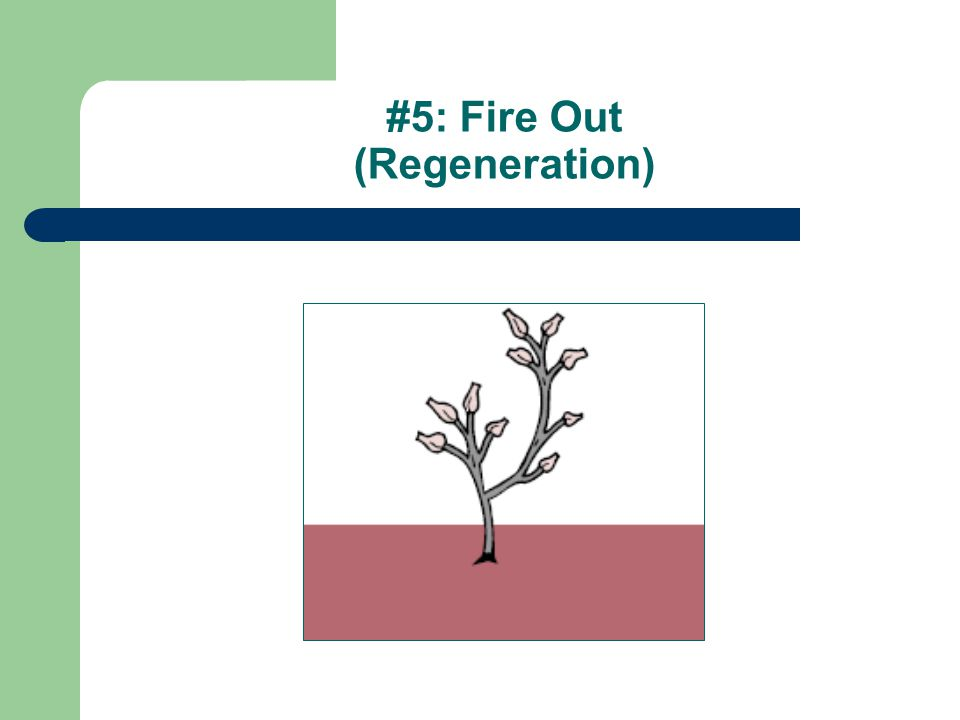 #5: Fire Out (Regeneration)