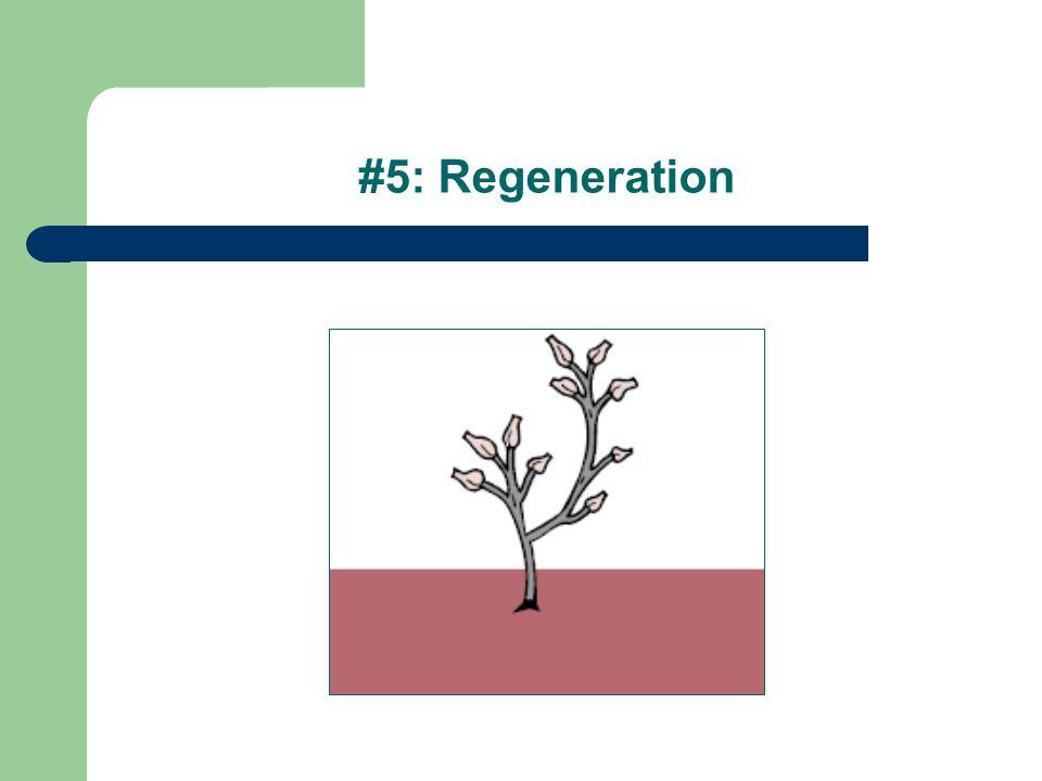 #5: Regeneration