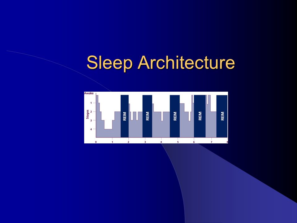 Sleep Architecture