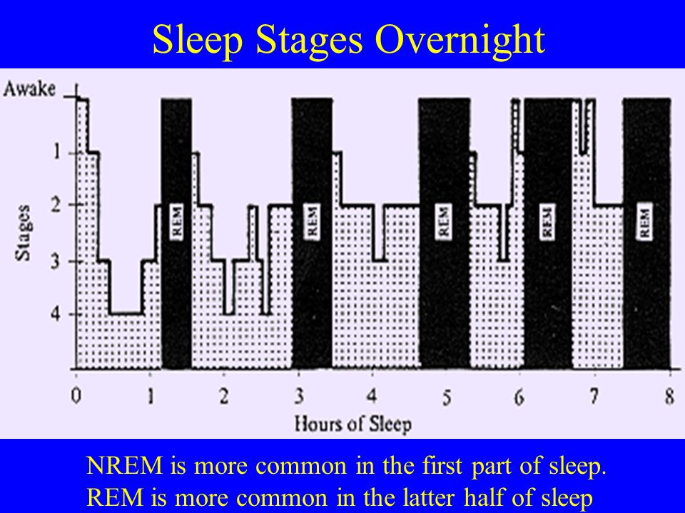 Sleep Stages Overnight NREM is more common in the first part of sleep. REM is more common in the latter half of sleep