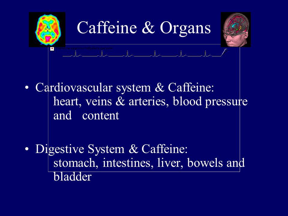 Caffeine & Organs Cardiovascular system & Caffeine: heart, veins & arteries, blood pressure and content Digestive System & Caffeine: stomach, intestines, liver, bowels and bladder