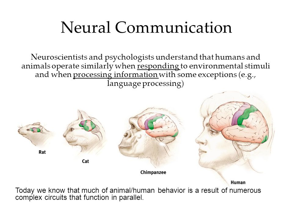 Neural Communication Neuroscientists and psychologists understand that humans and animals operate similarly when responding to environmental stimuli a