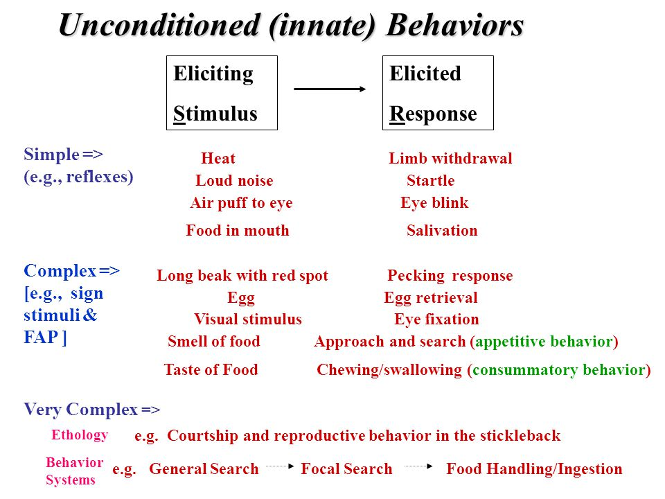 Eliciting Stimulus Elicited Response Unconditioned (innate) Behaviors Simple => (e.g., reflexes) Heat Limb withdrawal Air puff to eye Eye blink Food in mouth Salivation Loud noise Startle Complex => [e.g., sign stimuli & FAP ] Taste of Food Chewing/swallowing (consummatory behavior) Smell of food Approach and search (appetitive behavior) Long beak with red spot Pecking response Visual stimulus Eye fixation Egg Egg retrieval Very Complex => e.g.